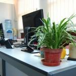 decoracao-de-escritorios-com-plantas-6