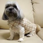 roupas-para-cachorros-3