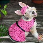 Roupas para Cachorros, Moldes e Fotos