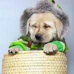 Roupas de Cães para o Inverno, Dicas e Fotos