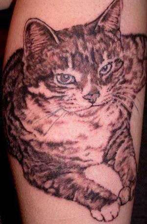 Tatuagens de Gatinhos, Dicas e Fotos