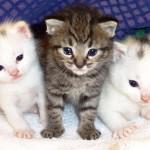 Significado de Sonhar com Gatos