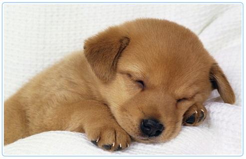 Significado de Sonhar com Cachorros