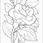 desenhos-de-flores-para-imprimir-e-colorir-9