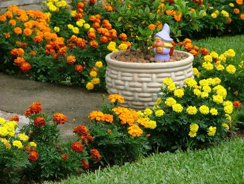 flores e jardins fotos:Tipos De Plantas Para Jardim