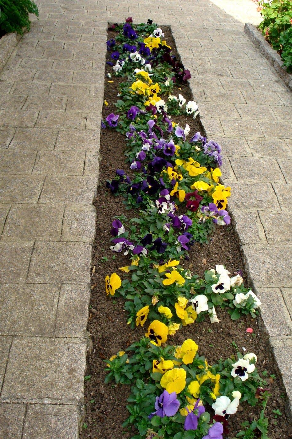 ideias para jardins simples:de como cuidar de cada planta flor e hortaliça do seu jardim para