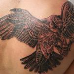 Modelos de Tatuagens de Falcão – Dicas, Fotos